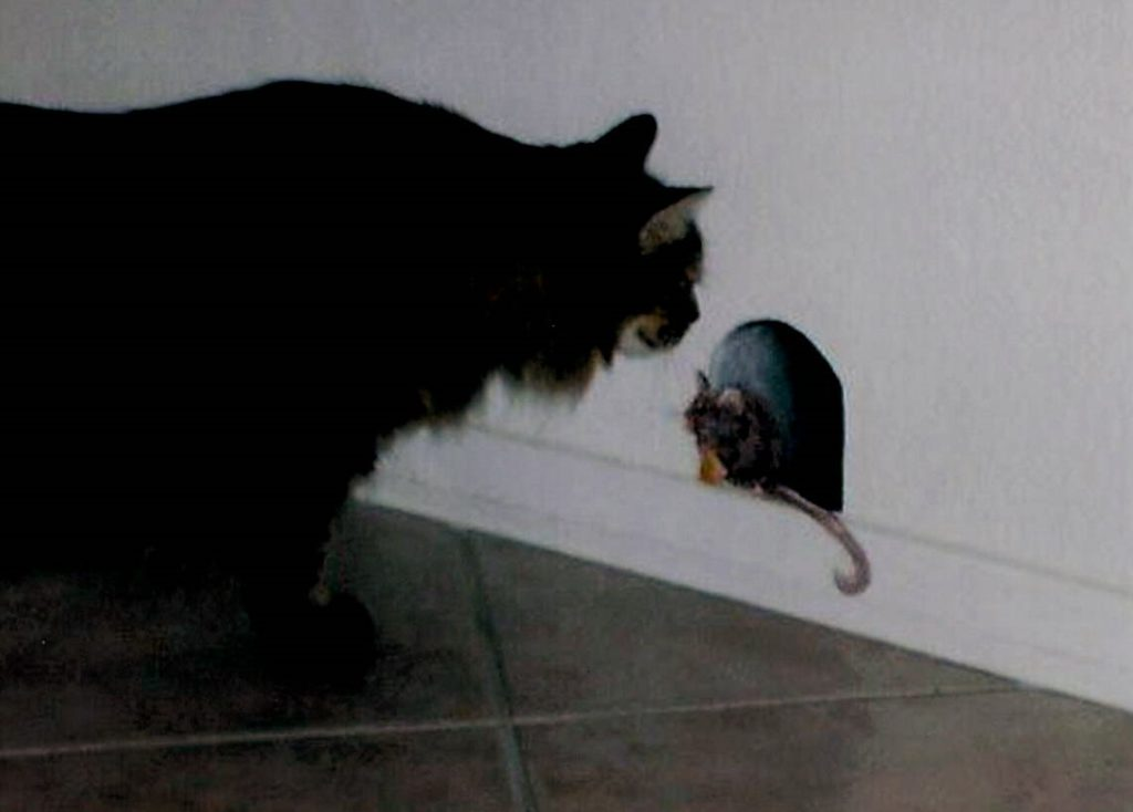 Mouse Hole - perfect photo timing!